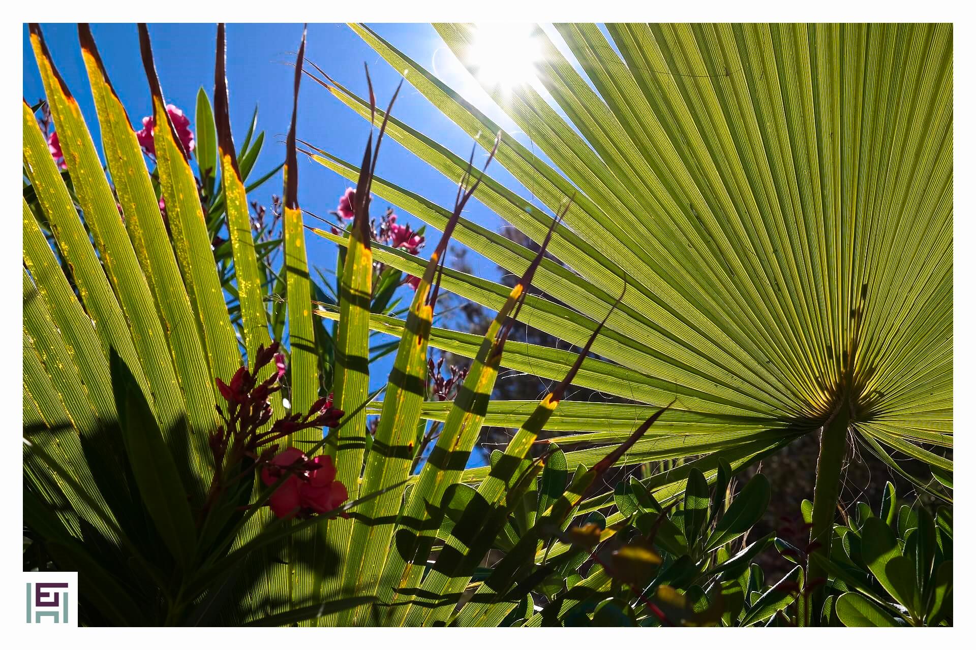 Shangri-La - Palme im Garten