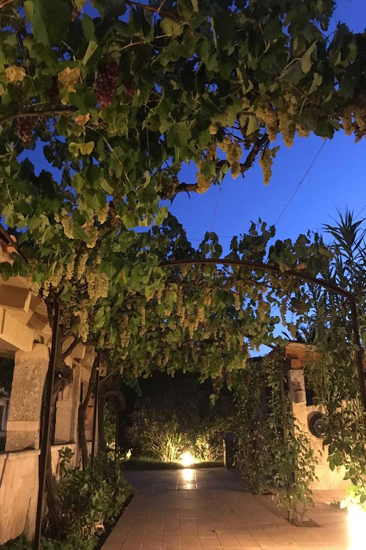 Finca C'an Murtera - Garden