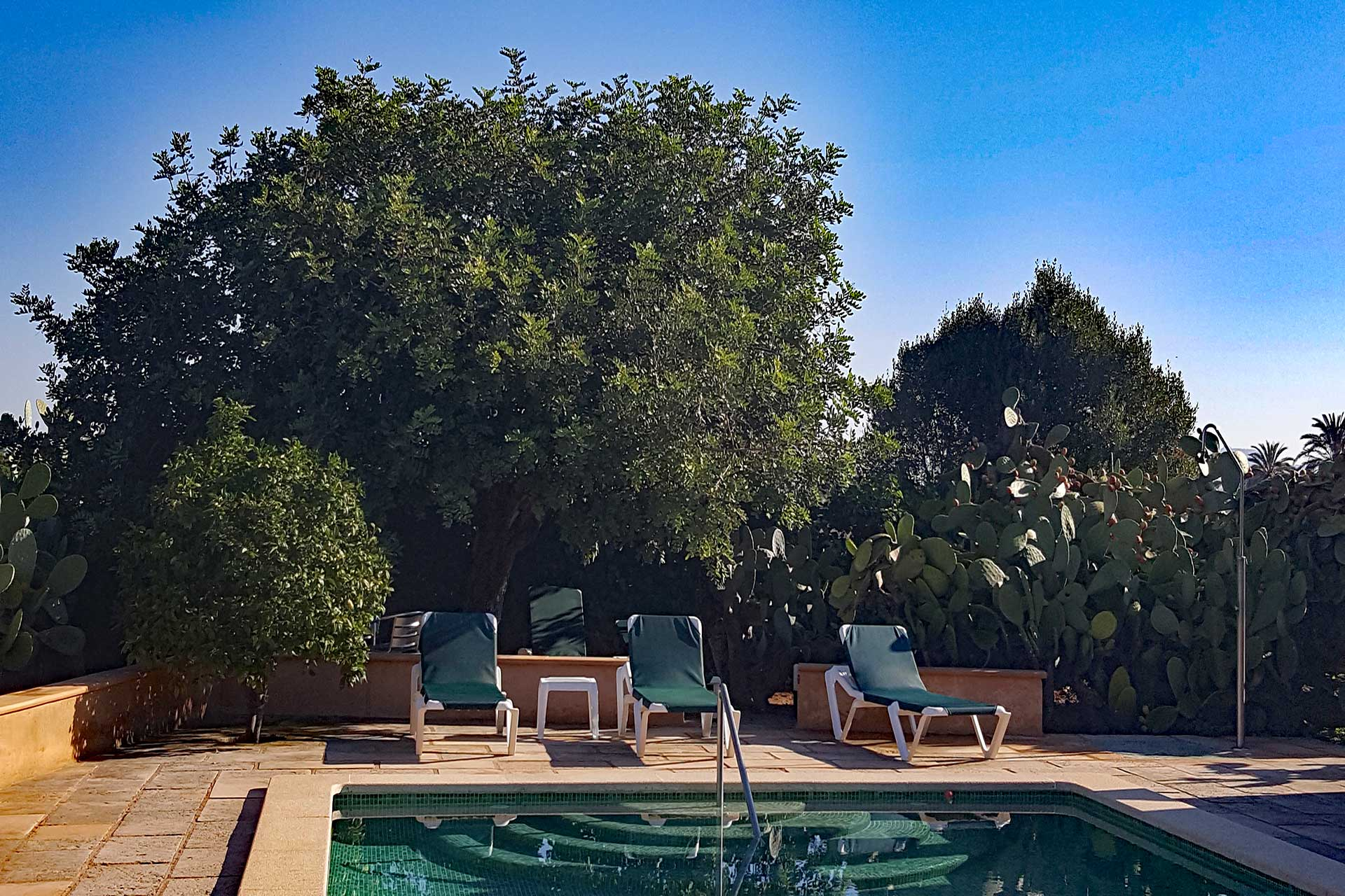 Finca C'an Murtera - Swimming pool