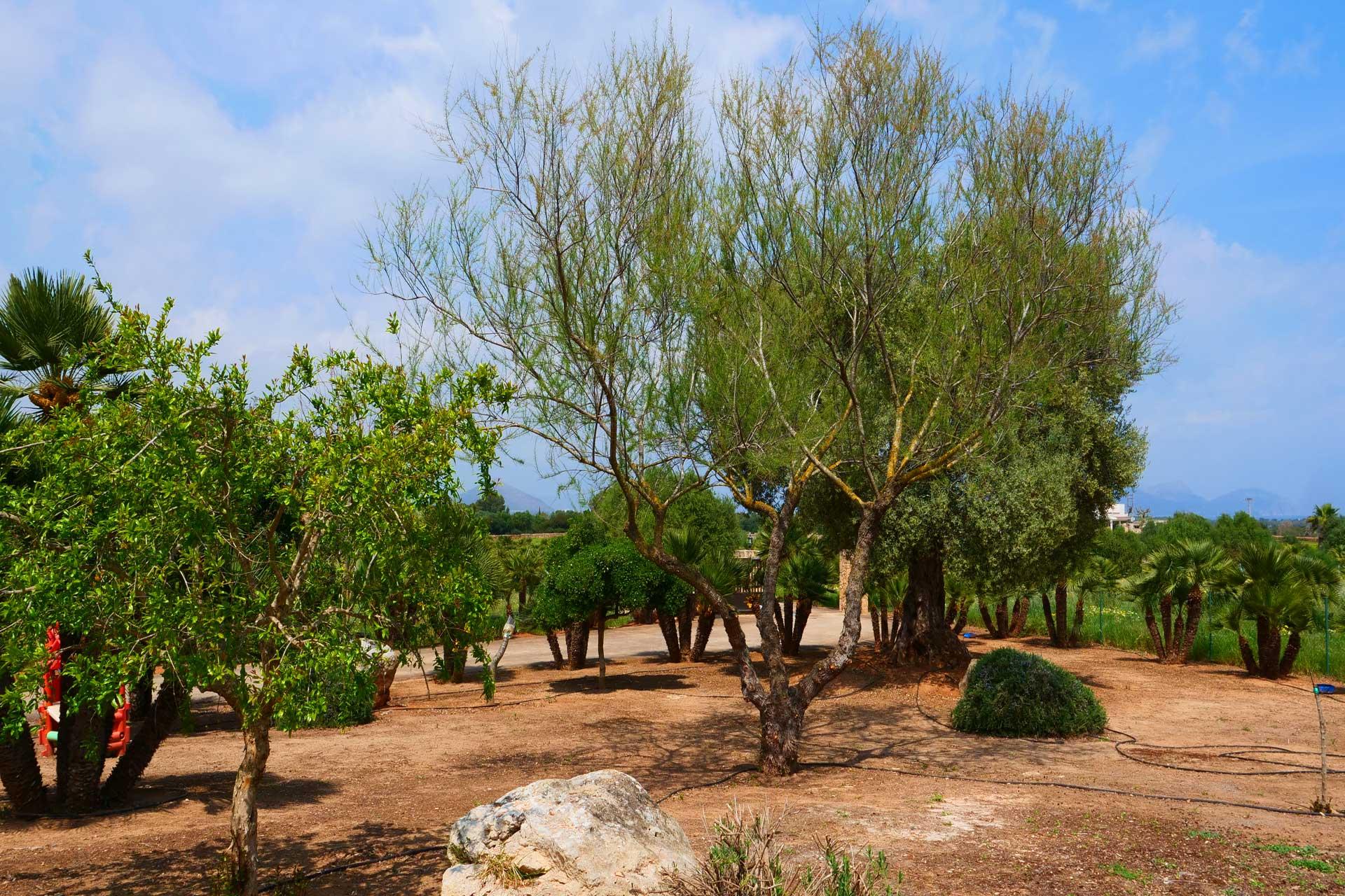 Finca Palmitos I - Garden